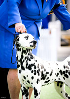 Royal Melbourne Show 2016 - In Show Classes
